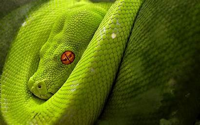 Snake Wallpapers Python Reptile Eyes Backgrounds Snakes