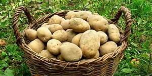 Kartoffeln Zum Einkellern Kaufen : warum es sich auch heute noch lohnt kartoffeln einzukellern ~ Lizthompson.info Haus und Dekorationen