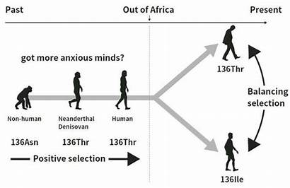 Evolution Human Traits Personality Disorders Psychiatric Selection