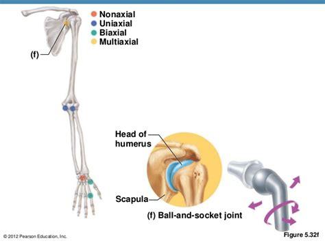 uniaxial biaxial multiaxial joints nonaxial skeleton google