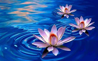 Lotus Flower Wallpapers Ipad Wallpapertag