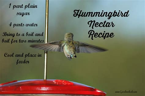 hummingbird feeder garden chick