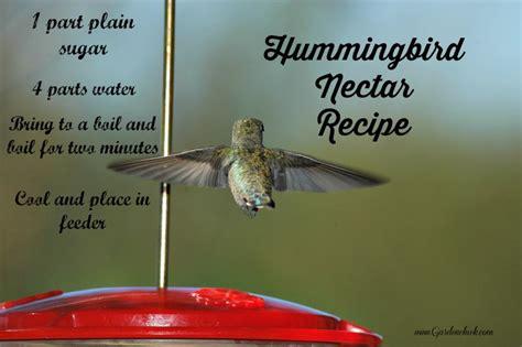 hummingbird nectar recipe hummingbird feeder garden chick