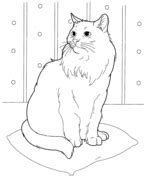 himalayan cat coloring page  printable coloring pages