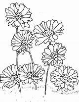 Daisy Coloring Flower Planting Printable Scout Getdrawings Getcolorings sketch template