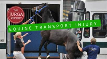 Horses Hurt Why Should Know Injuries Trailers