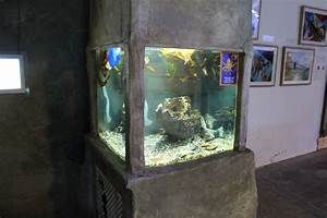 Case, Study, Octopus, Exhibits