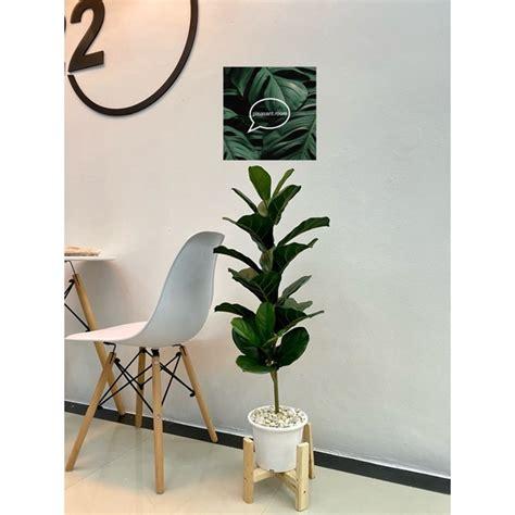 ต้นไม้ปลอมไทรใบสักปลอม สูง 90 เซน (ได้ต้นไม้กระถางหินขาว)   Shopee Thailand