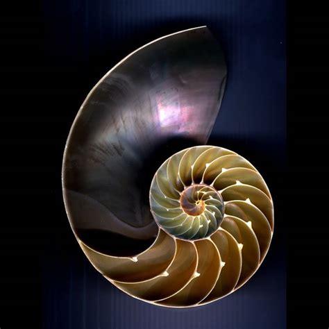 nautilus shell  metaphor  psychological growth