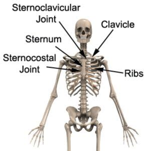 This illustration labeled regions of the human body show an anterior and posterior view of the body. Upper Back & Chest Pain Diagnosis Guide