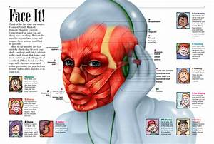 Human Face Diagram