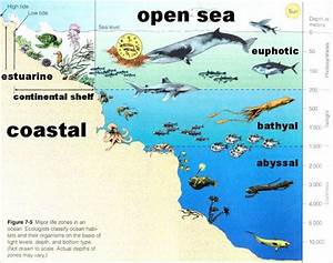 Sea Life Worksheets