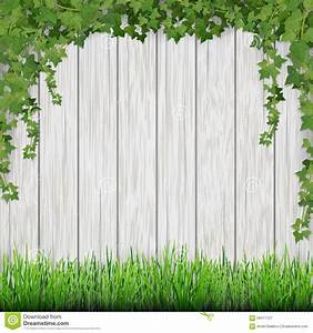 Planche De Bois Blanc : engazonnez et lierre accrochant sur le fond en bois blanc de planches illustration de vecteur ~ Voncanada.com Idées de Décoration