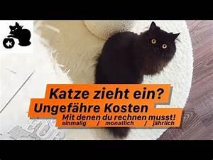Katze Kotzt Viel : wie viel kostet eine katze monatlich katze zieht ein ungef hre kosten bersicht youtube ~ Frokenaadalensverden.com Haus und Dekorationen