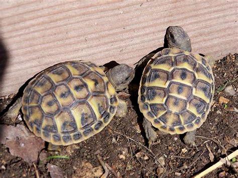 cuisine centrale ile de 170 bébés tortues de madagascar interceptées en