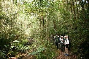 Jungle Trekking Tips - phongnhanationalpark