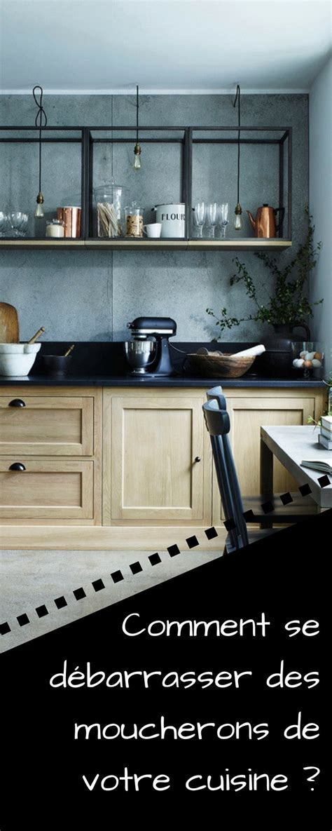 vous avez des moucherons dans votre cuisine voici la meilleure fa 231 on de s en d 233 barrasser