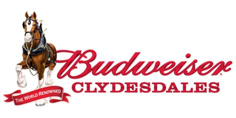 budweiser clydesdales horses  dc april   dc outlook