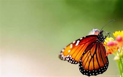 Butterfly Wings Bright Patterns Wallpapers Background Desktop