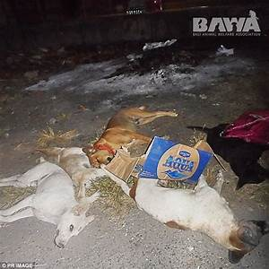 Dead dogs pile up in Bali after officials poison stray ...