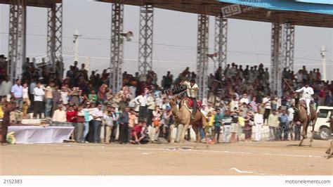 Pushkar Camel Festival Background by Camel Racing At Pushkar Camel Fair In India Stock