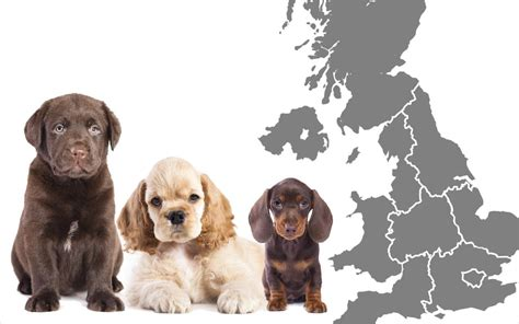 Dog Breeds In The Uk Mapped