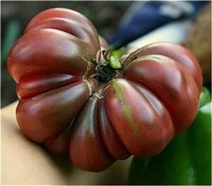 Black, Blue and Purple Fruited Tomatoes - Texas-Heirloom ...