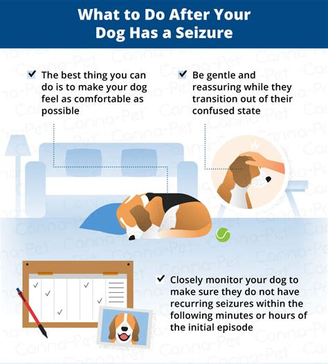 Dog Seizures What to Do