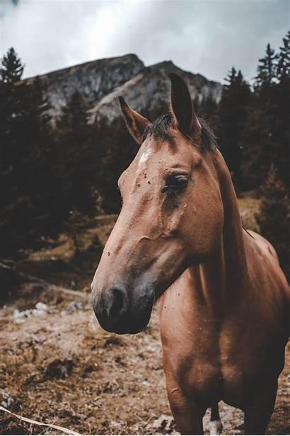 Horse Horses Flies Head Things Ground Garlic