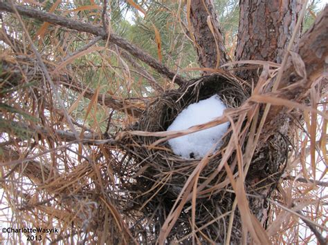 Winter Nests - Bird Canada
