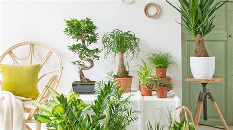 meuble pour plantes d intérieur 12 plantes d int 233 rieur pour apaiser l atmosph 232 re