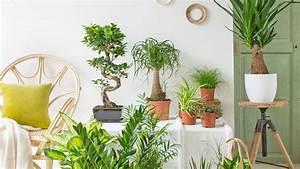 Plante De Salon : 12 plantes d int rieur pour apaiser l atmosph re ~ Teatrodelosmanantiales.com Idées de Décoration
