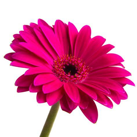 flower images pink flower adamtrevor s gallery gallery lumix g experience