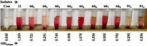 Hemolysis By Proteus Isolates  Standardized  10 9 Cfu  Ml