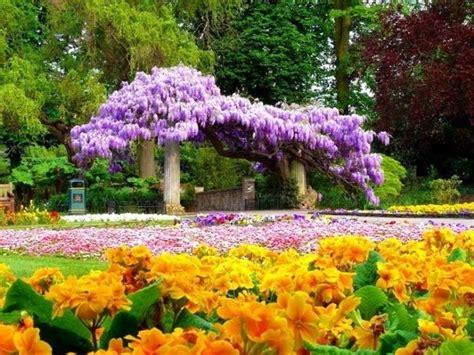 tipi di fiori elenco fiori elenco ricanti elenco fiori