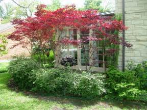 ornamental trees and interesting small ornamental trees available in our area