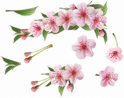 Clipart Spring Branch Elements Flores Transparent Yopriceville