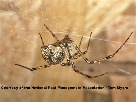 spider control extermination  spiders national pest