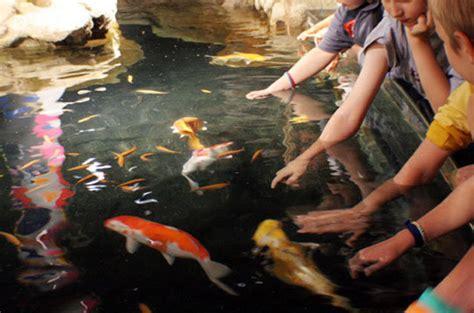 aquarium du trocadero tarifs cin 233 aqua aquarium de green hotels