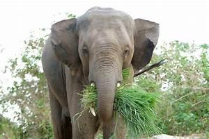 Asian elephants – You Just Gotta Love Them – RedDuckPost
