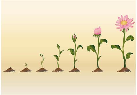 growing flower vectors free vector stock