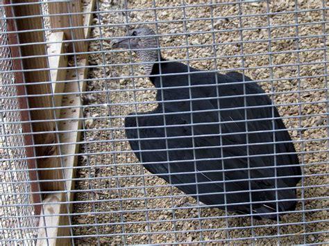 journal rogers wildlife rehabilitation center dfw