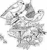 Coloring Winter Vogels Plank Bird Craft Kleurplaat Template Kdn sketch template