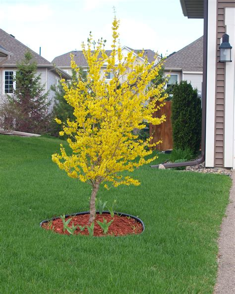 small landscape trees small landscape trees garden design with on pinterest 7 25