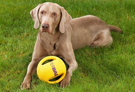 Putztipps Fuer Den Haushalt Mit Hund by Hunde Spielzeug 187 Interball 171 Kaufen Otto