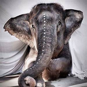 Baby indian elephant | Pachyderms | Pinterest