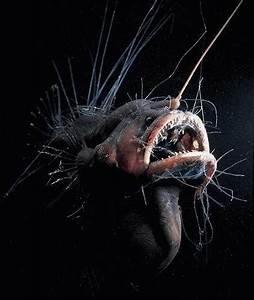 Alien Creatures of the Mariana Trench - RobotSpaceBrain