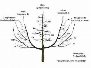 Apfelbaum Wann Schneiden : kurs im obstbaumschnitt mit eva stadtbauernhof saarbr cken ~ Frokenaadalensverden.com Haus und Dekorationen