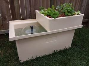 What Is Aquaponics  All You Need To Know