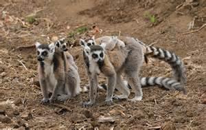 Madagascar Wildlife Animals